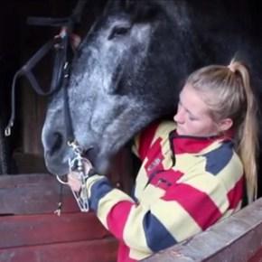 WINOL: Horse owners hit by 'devestating' disease